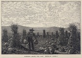 view Pumpkins Among the Corn, from Scribner's Monthly, An Illustrated Magazine for the People, August 1878 digital asset number 1