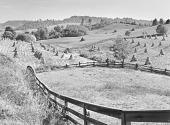 view Fields of shucked corn. Near Marion, Virginia digital asset number 1