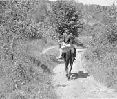 view Couple carrying home groceries, kerosene on horseback. Kentucky Mountains digital asset number 1