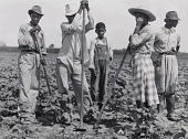 view Negro men and women working in a field, Bayou Bourbeaux Plantation. Natchitoches, Louisiana digital asset number 1