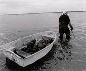 view Horseshoe Crab Fisherman digital asset number 1