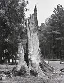 view Dead Tree digital asset number 1