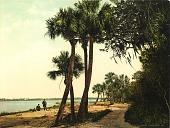 view Scene, Indian River, Florida digital asset number 1