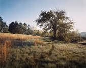view Untitled, from the series Meadow, Carlisle, Massachusetts digital asset number 1