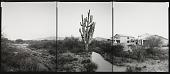 view National Champion Saguaro, Arizona, 2001 digital asset number 1