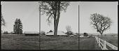 view National Champion Valley Oak, California, 1994 digital asset number 1