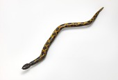 view Untitled (Rattlesnake) digital asset number 1