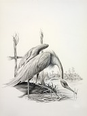 view A Heron, from Lettered Creatures digital asset number 1