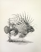view Lionfish, from Lettered Creatures digital asset number 1