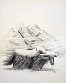 view Yaks, from Lettered Creatures digital asset number 1