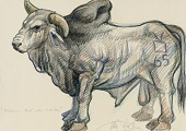 view Brahma Bull with Bent Horn digital asset number 1