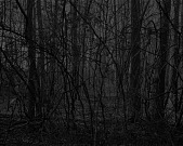 view Untitled #17 (Forest), from the series Night Coming Tenderly, Black digital asset number 1