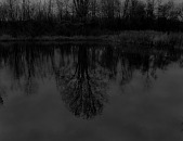 view Untitled #13 (Trees and Reflections), from the series Night Coming Tenderly, Black digital asset number 1