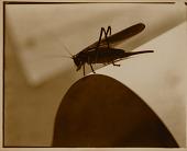 view Diagram of Doom (Grasshopper) digital asset number 1