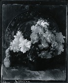 view Peonies [painting] / (photographed by Peter A. Juley & Son) digital asset number 1
