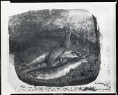 view Brook Trout [painting] / (photographed by Peter A. Juley & Son) digital asset number 1