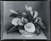 view Calla Lilies [art work] / (photographed by Peter A. Juley & Son) digital asset number 1