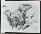 view Calla Lillies [painting] / (photographed by Peter A. Juley & Son) digital asset number 1