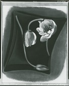 view Pond Lillies [drawing] / (photographed by Peter A. Juley & Son) digital asset number 1