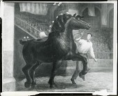 view The Stallion [painting] / (photographed by Peter A. Juley & Son) digital asset number 1