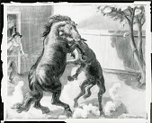 view Stallion and Jack Fighting [painting] / (photographed by Peter A. Juley & Son) digital asset number 1