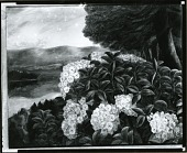view Mountain Laurel [art work] / (photographed by Peter A. Juley & Son) digital asset number 1