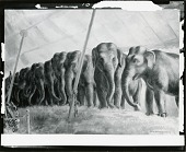 view Circus Elephants [painting] / (photographed by Peter A. Juley & Son) digital asset number 1