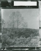 view Twin Birches [painting] / (photographed by Peter A. Juley & Son) digital asset number 1
