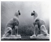 view Pumas [sculpture] / (photographed by Peter A. Juley & Son) digital asset number 1