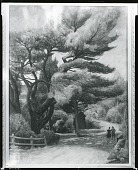 view A Tree on the Cape [painting] / (photographed by Peter A. Juley & Son) digital asset number 1