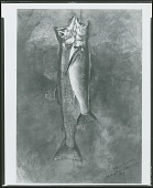 view Two Trout [painting] / (photographed by Peter A. Juley & Son) digital asset number 1