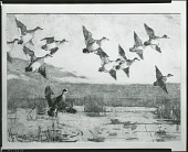view No Title Given: Ducks [painting] / (photographed by Peter A. Juley & Son) digital asset number 1