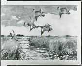 view Widgeon over a Marsh [painting] / (photographed by Peter A. Juley & Son) digital asset number 1