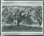 view The Great Elm [painting] / (photographed by Peter A. Juley & Son) digital asset number 1