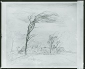 view Wind Blown Elm [drawing] / (photographed by Peter A. Juley & Son) digital asset number 1