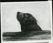 view Blind Seal [drawing] / (photographed by Peter A. Juley & Son) digital asset number 1