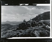 view Driven Grouse, Perthshire [painting] / (photographed by Peter A. Juley & Son) digital asset number 1