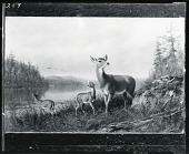 view Doe and Two Fawns at the Lake Shore [painting] / (photographed by Peter A. Juley & Son) digital asset number 1