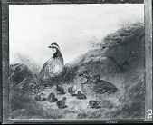 view Quail and Young: Domestic Happiness [painting] / (photographed by Peter A. Juley & Son) digital asset number 1