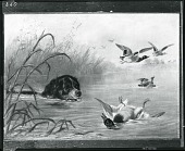 view Dog and Wild Ducks [painting] / (photographed by Peter A. Juley & Son) digital asset number 1