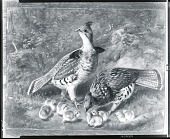 view Pair Ruffed Grouse and Young [painting] / (photographed by Peter A. Juley & Son) digital asset number 1