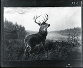 view Stag [painting] / (photographed by Peter A. Juley & Son) digital asset number 1