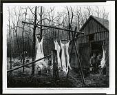view Butchering at Mr. Fluck's Place [graphic arts] / (photographed by Peter A. Juley & Son) digital asset number 1