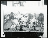 view Flowering Trees [painting] / (photographed by Peter A. Juley & Son) digital asset number 1