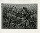 view Quail at Edge of the Woods [painting] / (photographed by Peter A. Juley & Son) digital asset number 1
