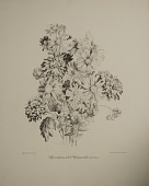 view Ageratums and Chrysanthemums, [photomechanical print] digital asset number 1