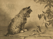view Terrier Watching a Butterfly [photomechanical print] digital asset number 1