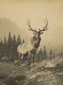 view An Elk of By-Gone Times [photomechanical print] digital asset number 1