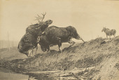 view Moose Fight [photomechanical print] digital asset number 1