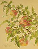 view Apples [photomechanical print] digital asset number 1